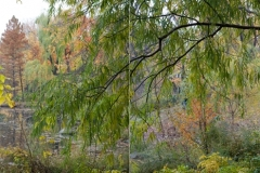 CP_Pond_11-15_diptych_WP_website